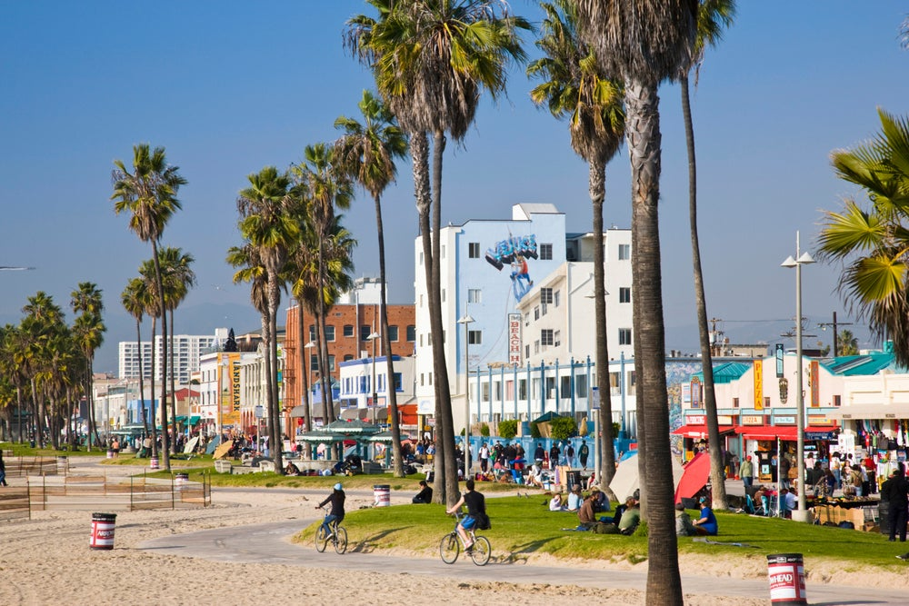 Palm trees at Venice Boardwalk.