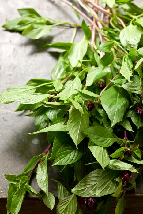 Bunch of Thai Basil at Time For Lime cooking school.