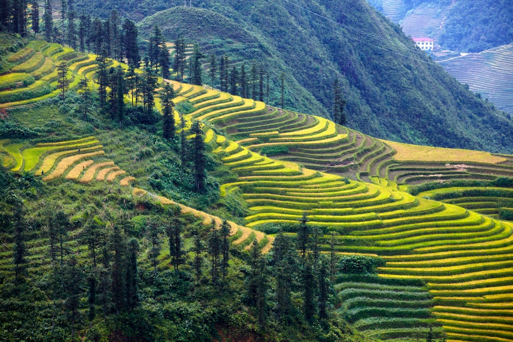 Cascading rice terraces near Sapa.