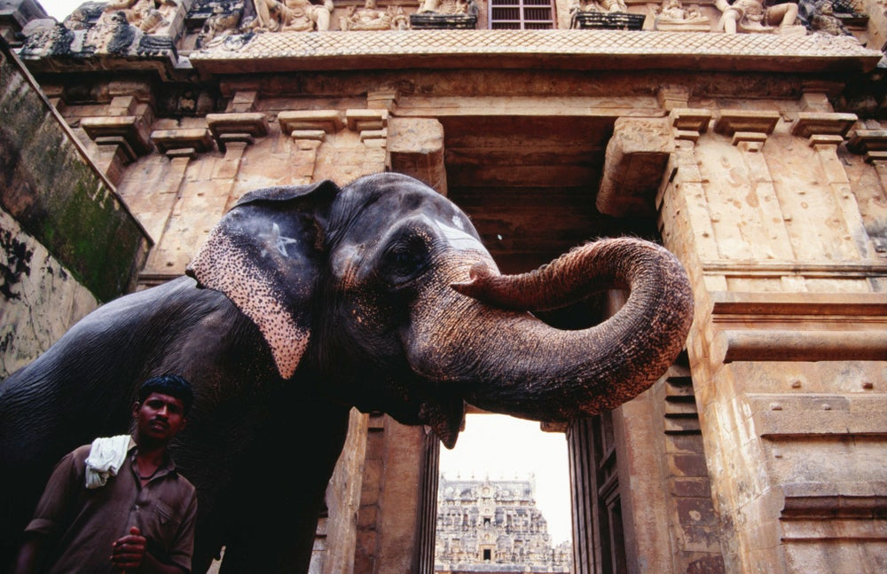 Tamil Nadu, Thanjavur (Tanjore) image gallery - Lonely Planet