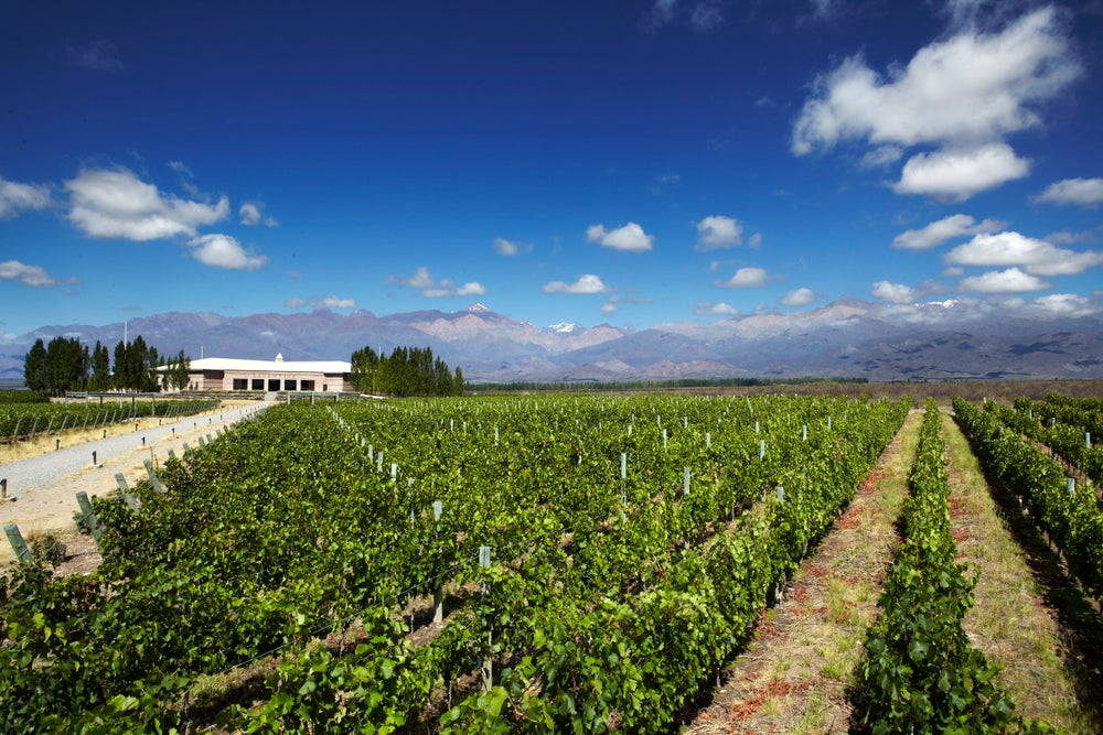 Vineyards in valley with Andean peaks in background.